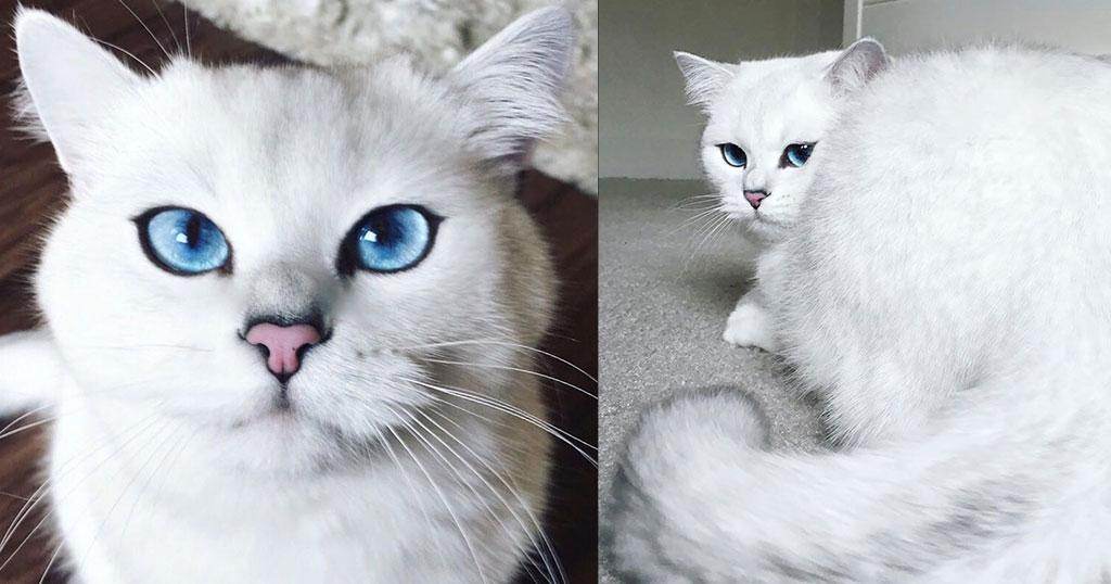 Αυτός είναι ο γάτος με τα πιο όμορφα μάτια στον κόσμο