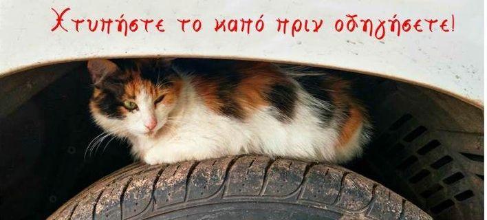 «Τετράποδοι λαθρεπιβάτες» -Η ΓΓ Πολιτικής Προστασίας για τα γατάκια στα καπό, τι να κάνετε [εικόνα]