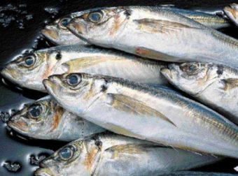 Αν δεις ψάρι στον ύπνο σου… Μάθε τι σημαίνει!