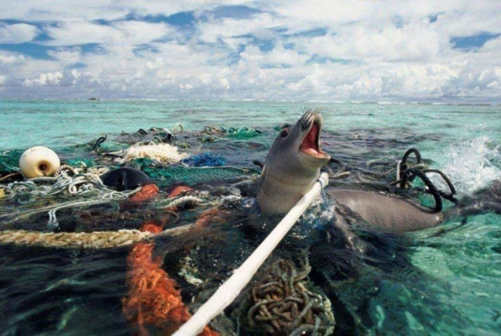 Σε 40 χρόνια η ανθρωπότητα εξόντωσε το 60% των ζώων στον πλανήτη Γη