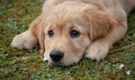Κιλκίς: Συνελήφθη κτηνοτρόφος που σκότωσε σκύλο πυροβολώντας τον με καραμπίνα