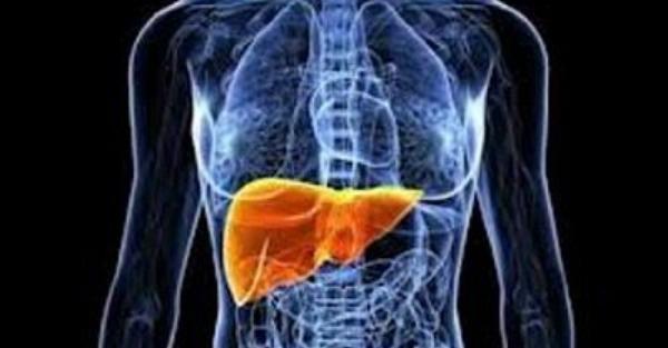 Το τρόφιμο-φάρμακο που προστατεύει και αναγεννά το ήπαρ