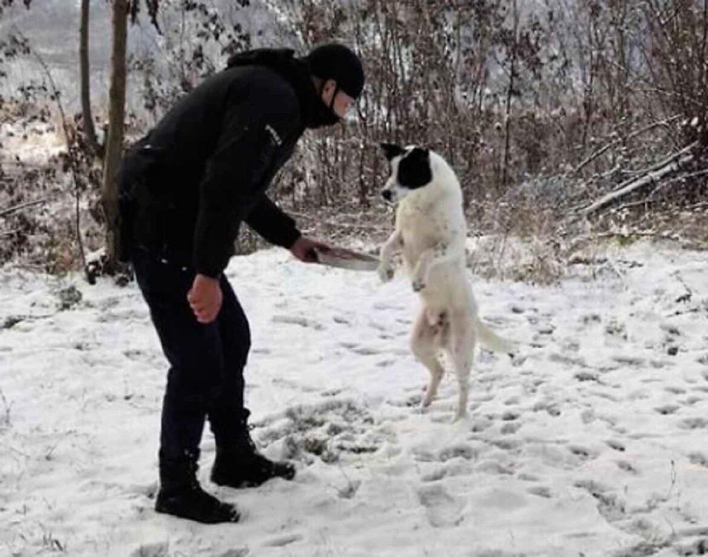 Δελβινάκι Ιωαννίνων: Αστυνομικός δίνει φαγητό σε αδέσποτο σκυλάκι και η φωτογραφία γίνεται viral