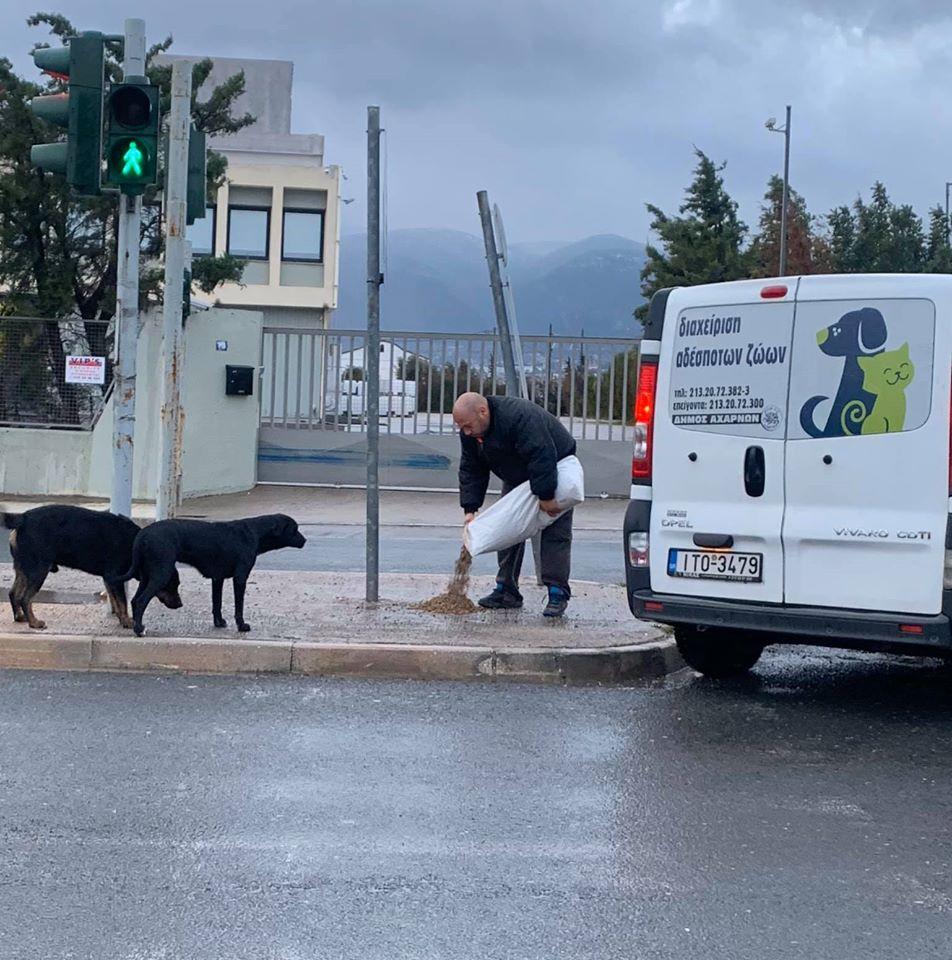 Ο δήμος Αχαρνών έστειλε υπαλλήλους να ταϊσουν τα αδέσποτα