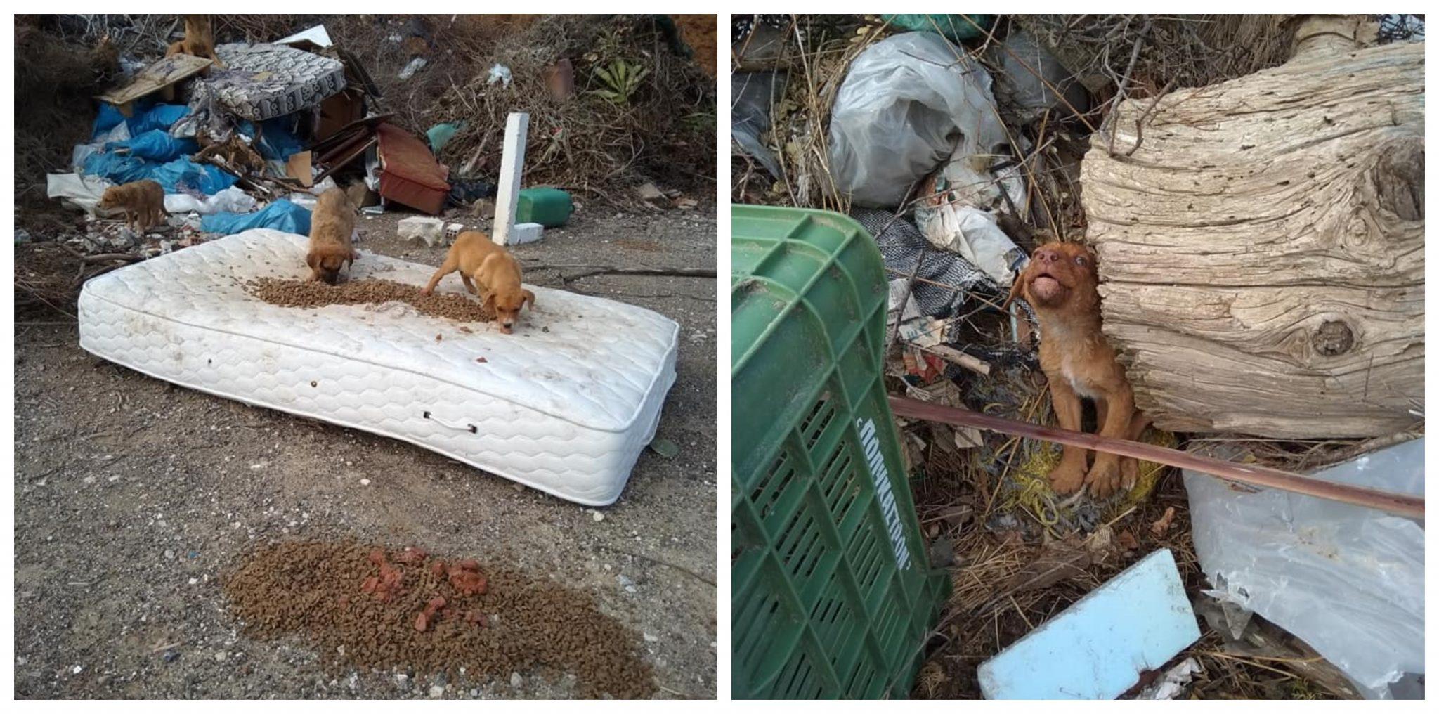 Ντροπή: Γεμάτη κουτάβια η χωματερή Λουτρακίου αλλά ο Δήμος συνεχίζει να μη νοιάζεται