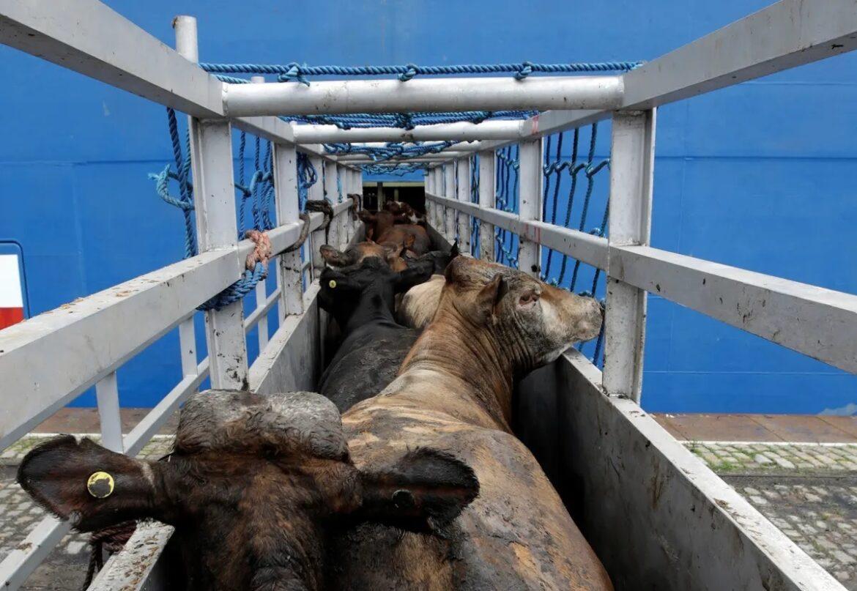 Χιλιάδες άρρωστα και μελλοθάνατα ζώα είναι δύο μήνες σε φορτηγά πλοία ανοικτά της Κύπρου