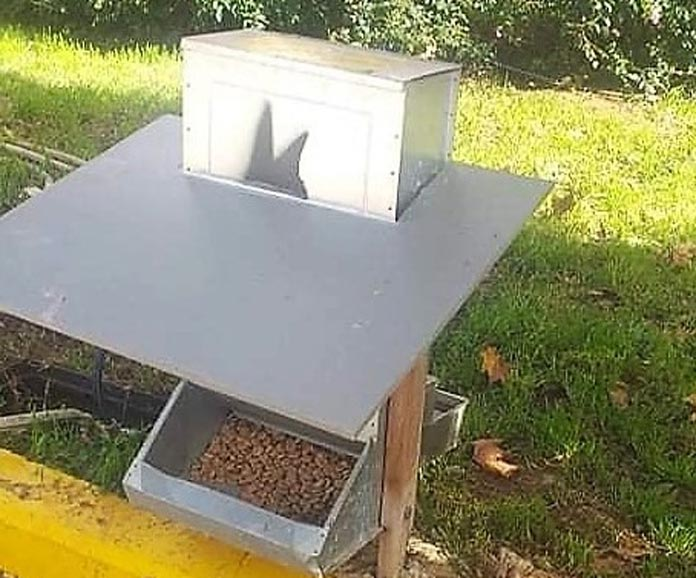 Ο δήμος Πειραιά έβαλε ταΐστρες και ποτίστρες για τα αδέσποτα- Υπάλληλος φροντίζει καθημερινά, σύμφωνα με την ανακοίνωση, να υπάρχει τροφή και νερό