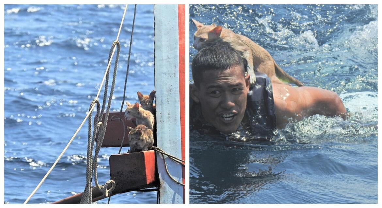 Το Πολεμικό Ναυτικό της Ταϊλάνδης σώζει γατούλες που βρίσκονταν σε πλοίο που είχε πιάσει φωτιά και βυθιζόταν [εικόνες]