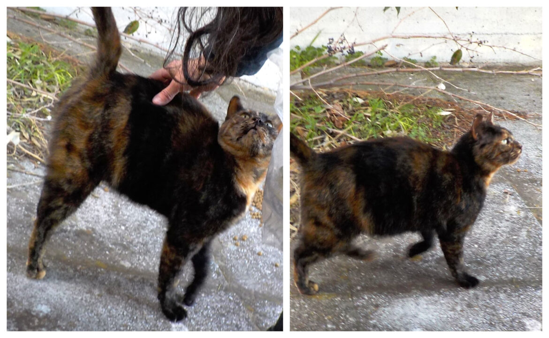 Βρέθηκε έγκυος κοντά σε βουνό αλλά τα γατάκια της είχαν πεθάνει- Ψάχνει σπίτι να μην ξαναπάει εκεί