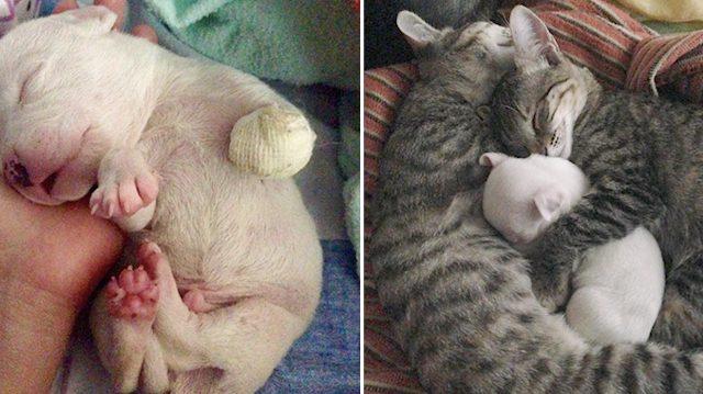Αυτό το κουτάβι που παραλίγο να το κατασπαράξει η ίδια του η μάνα, σώθηκε και ζει σήμερα με 6 γάτες στη νέα του οικογένεια