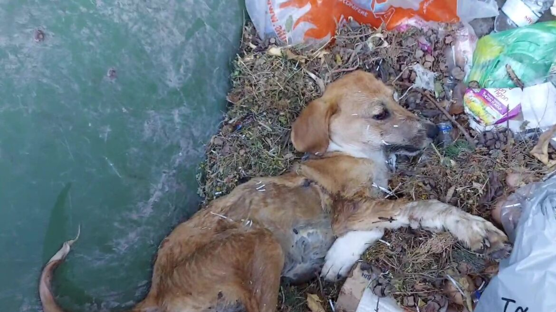 Σάμος: Βρήκαν σκυλάκι ζωντανό, πεταμένο μέσα σε κάδο σκουπιδιών- Ντροπή πια