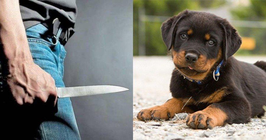 Τον τραυμάτισε με μαχαίρι επειδή του έκανε παρατήρηση για το σκυλί